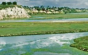 Upper Newport Bay